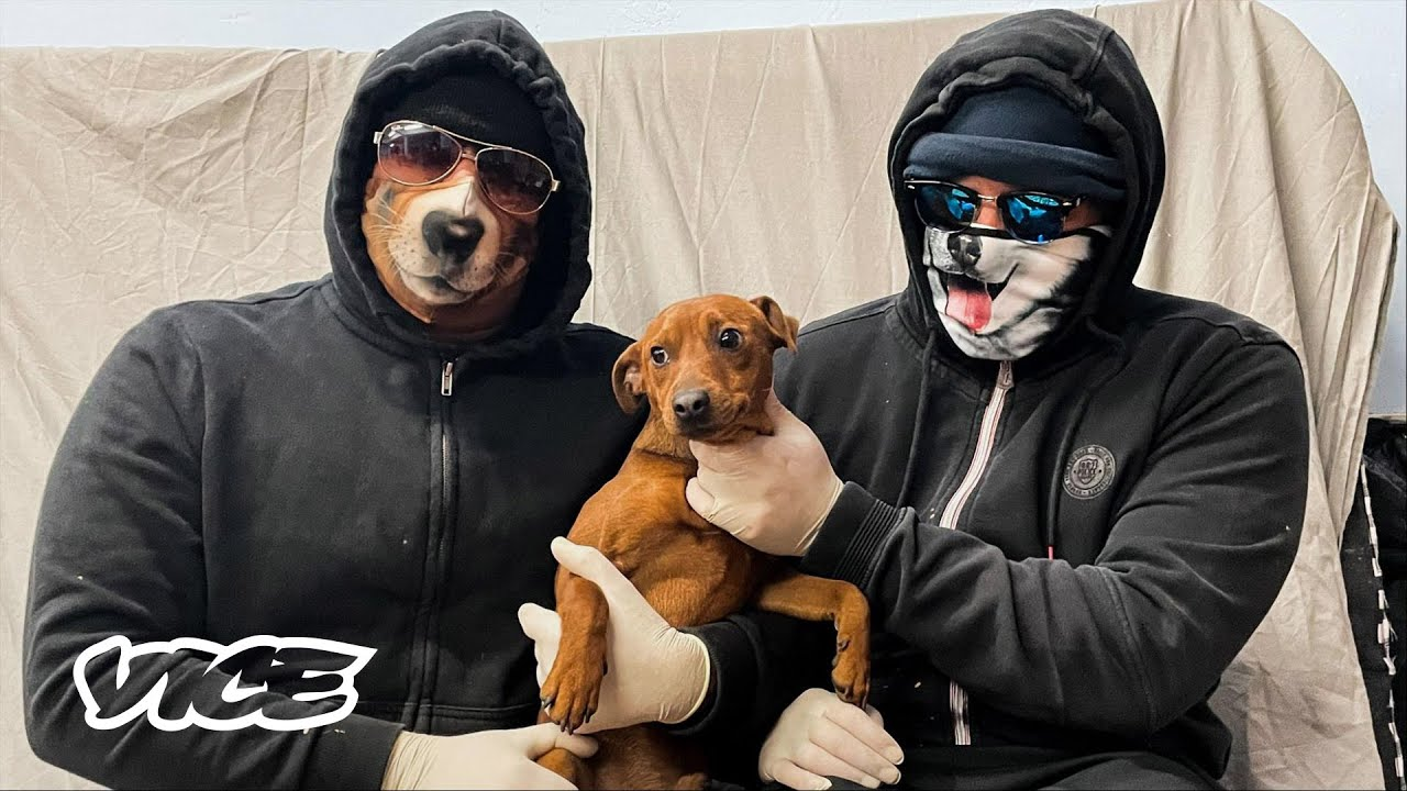 The Gangs That Steal Your Puppies