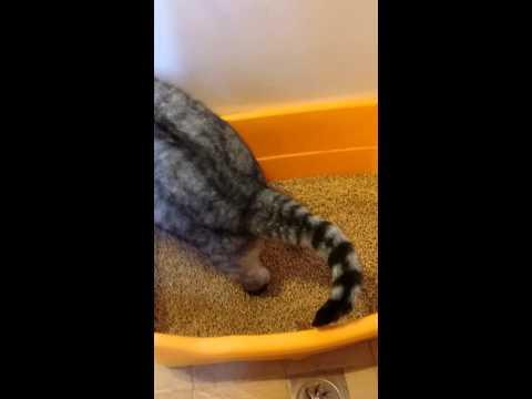 =白喵小舗=Cats Joy喜樂貓《崩解型松木貓砂 不規則長短條-原木》20L/包 貓、兔子及小動物均適用