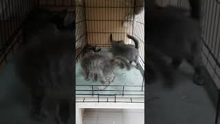 Слепые котята из приюта Дом малютки г. Тольятти
