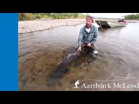 MONGOLIA - Fly Fishing For Taimen