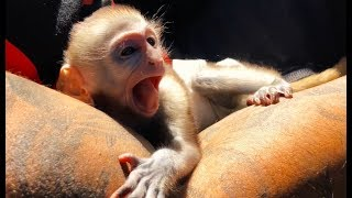 Baby monkey day in the life!