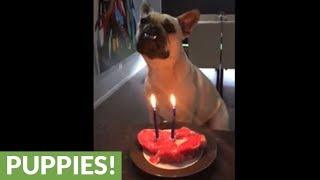 Birthday dog celebrates with steak cake