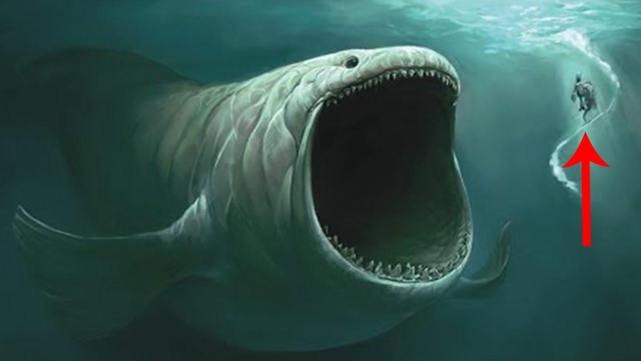 Los 10 animales m s aterradores encontrados en las profundidades del mar youtube - Fotos fondo del mar ...