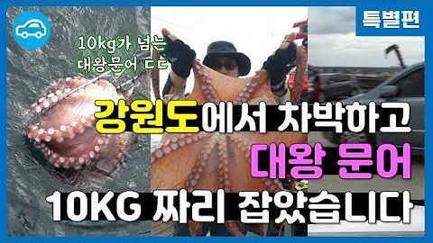 [차박 낚시] 강원도 대왕문어 17kg짜리 실제 잡는 모습