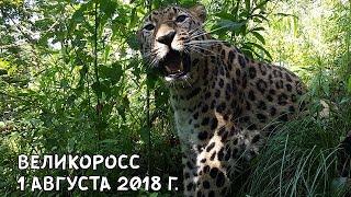 ВЕЛИКОРОСС 1 АВГУСТА 2018 Г.
