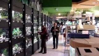 Kolle Zoo, зоомаркет в Германии, продажа аквариумных рыбок(, 2010-09-26T13:43:17.000Z)