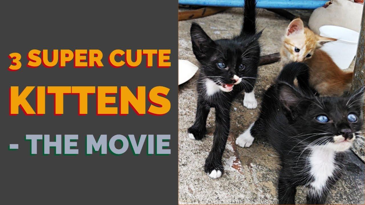 Three Super Cute Kittens Youtube