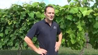 Chateau Elan Winery - Winery Update July 2014