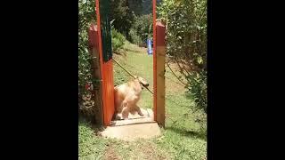 funny animals :D