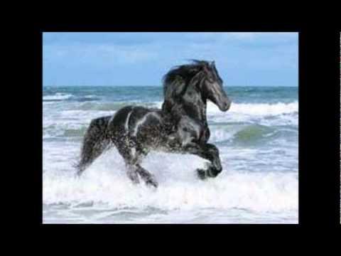 Beatriz Adriana - Trota caballo