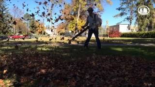 Your moment of zen: leaf blowing on campus Thumbnail