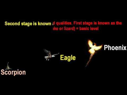 Three Stages of Scorpio zodiac sign - Scorpion Eagle
