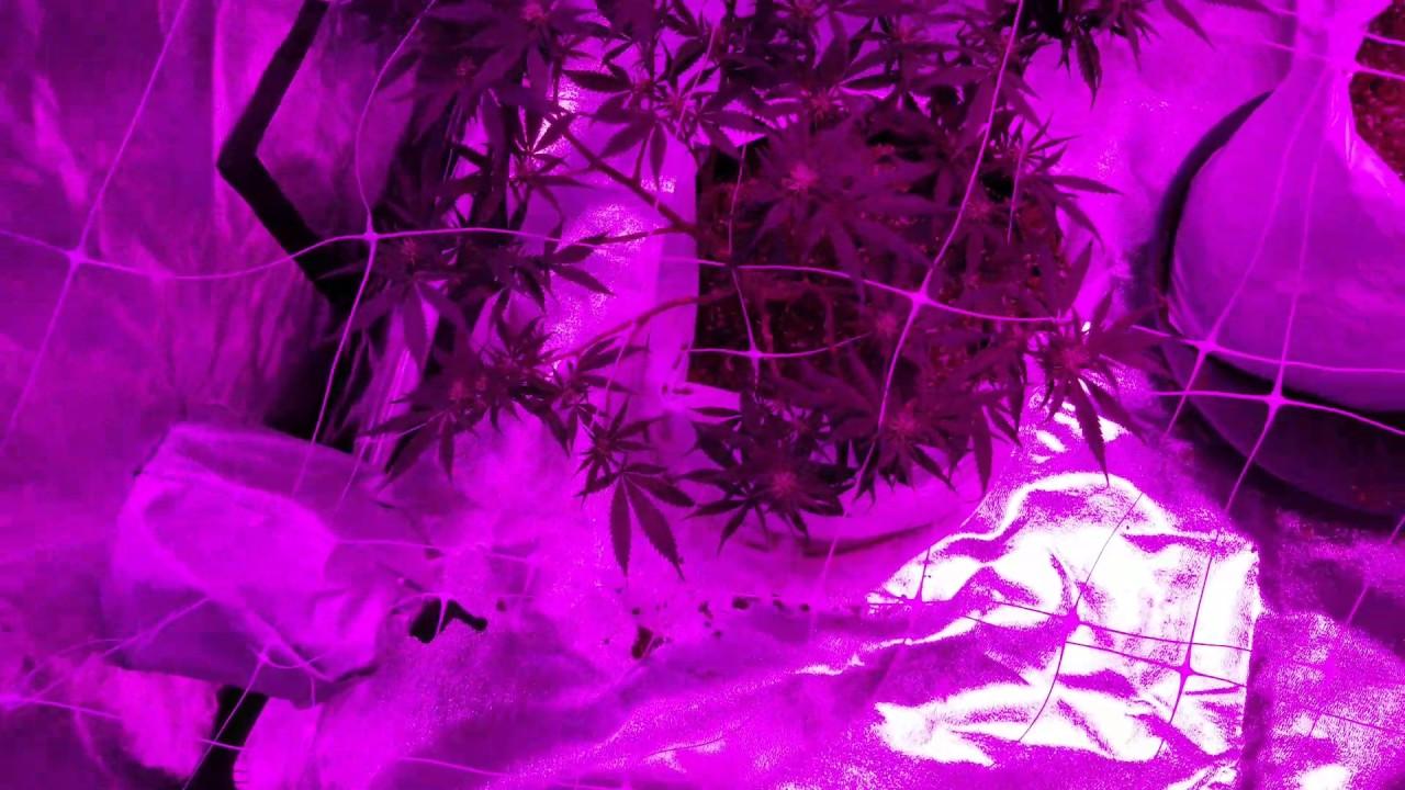 4'x8' LED Grow setup