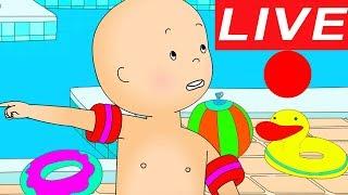 Caillou en Español - LIVE 🔴 Caillou Aprende a Nadar | Dibujos animados para niños