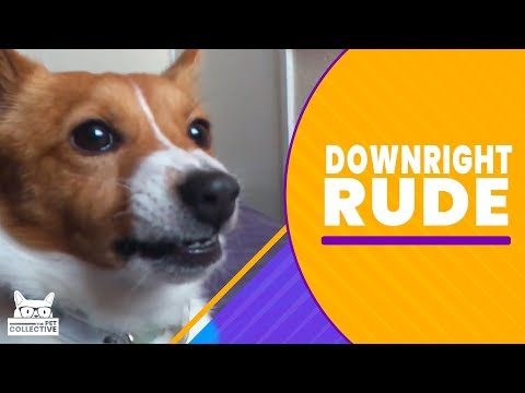 Downright Rude | The Pet Collective