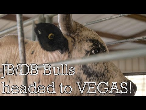 JB/DB Bulls Headed To NFR - Rodeo Time 165