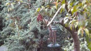 Squirrel Stuck In 'squirrel Proof' Birdfeeder!