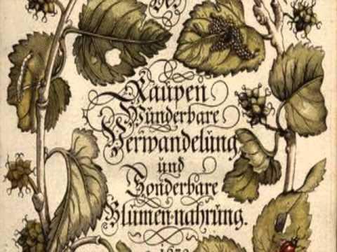 """Buchtrailer """"Der Fluch der Sommervögel"""""""
