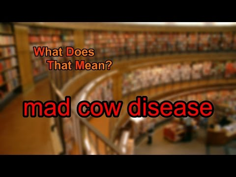 What does mad cow disease mean?
