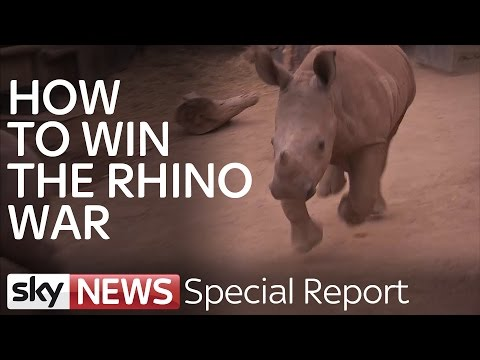 Rhino Wars: Hunting Poachers In Kruger National Park | Special Report