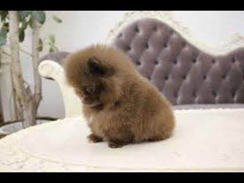 【かわいい】フォルムの丸い子犬たちがとてもかわいい!!~Round Puppies~【子犬】
