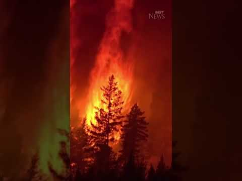 This close-up footage shows a forest fire burning in British Columbia #shorts