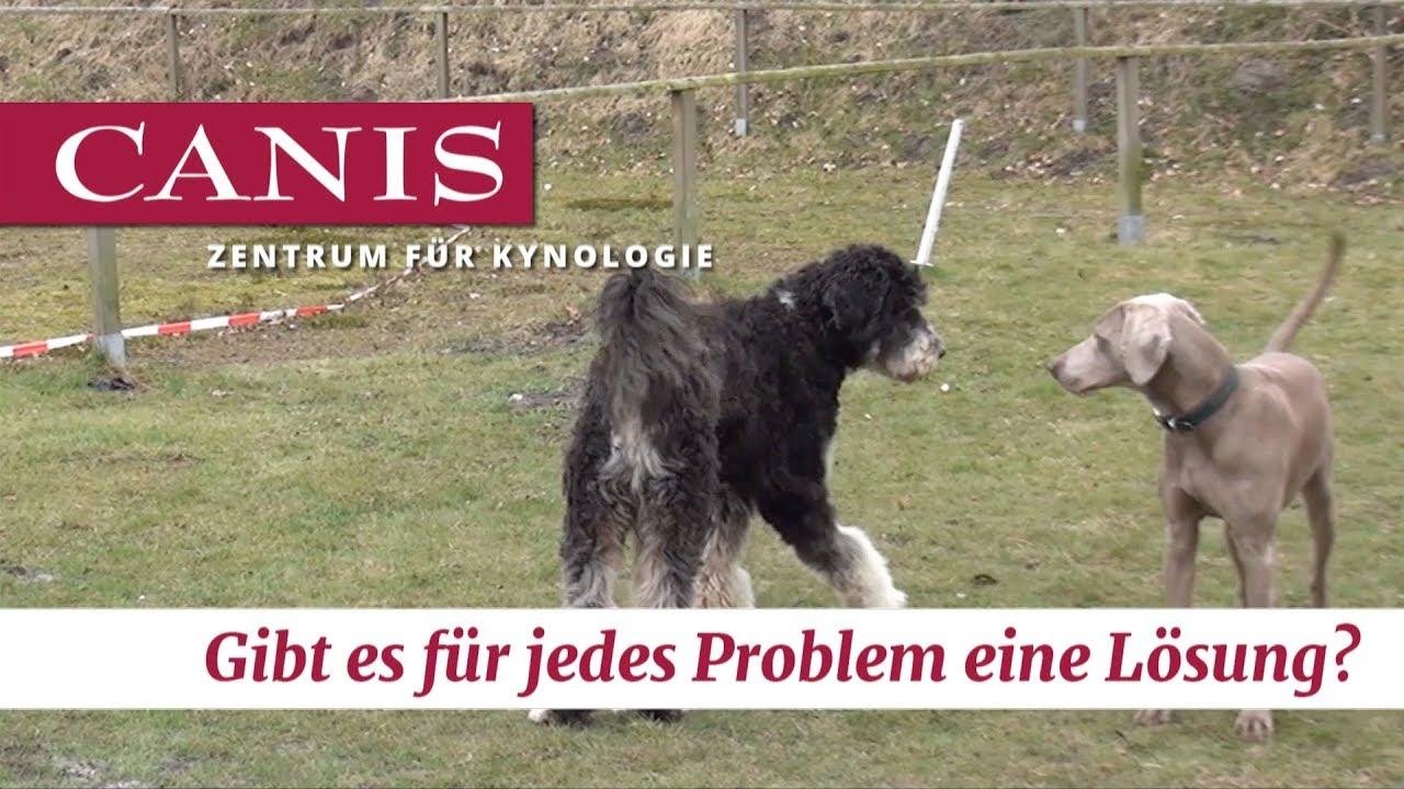 Für Jedes Problem Eine Lösung