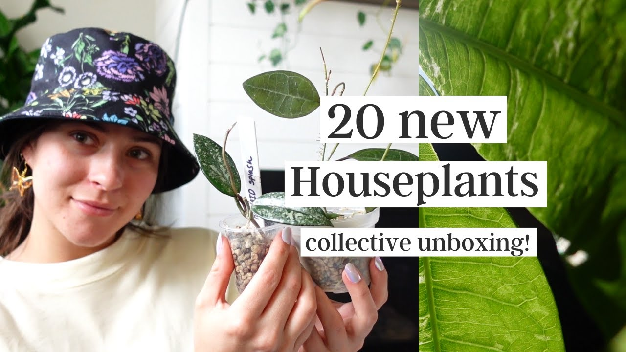 Collective Houseplant Unboxing! | Houseplant & Planter Mail Haul(:
