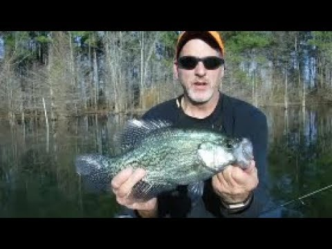 Catching Slab Crappie In  An Eastern NC Creek - North Carolina Crappie Fishing