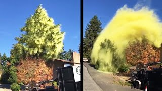 A Really Itchy Rhino