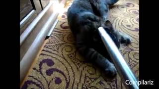 Кошки любят пылесос Подборка 2013