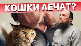 Кошки лечат? Священник Максим Каскун
