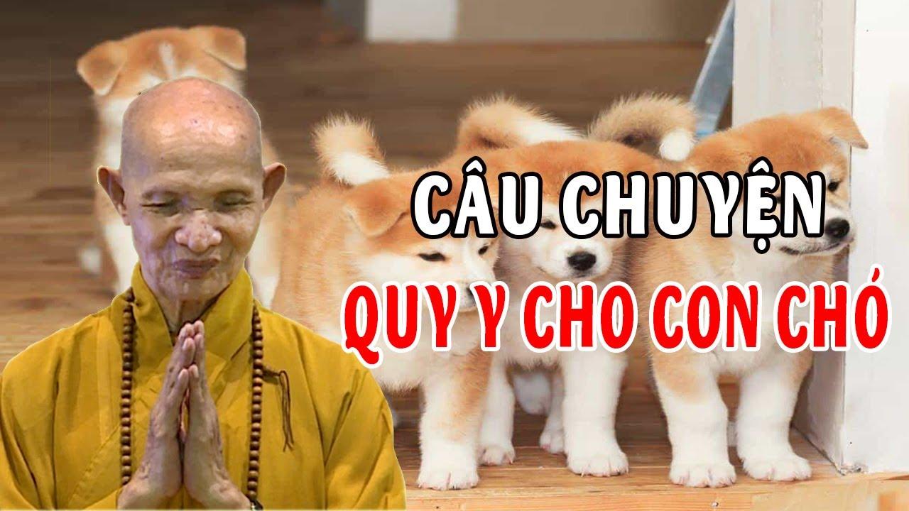Hóa Độ Cho Súc Sinh - Câu Chuyện Quy Y Cho Con Chó - Truyện Tâm Linh Thích Giác Hạnh