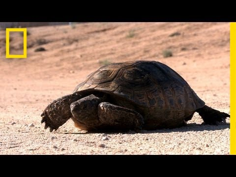 The Tortoise and the Solar Plant | National Geographic
