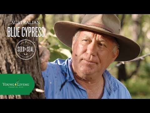 the-origin-of-australian-blue-cypress:-seed-to-seal®-in-the-outback