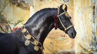 Самые красивые лошади мира!!!5 ПОРОД