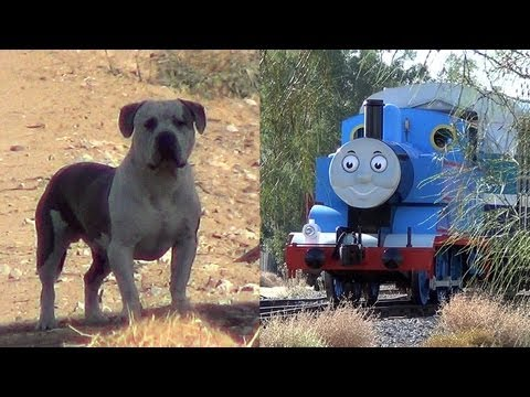 dog-and-his-day-out-with-thomas