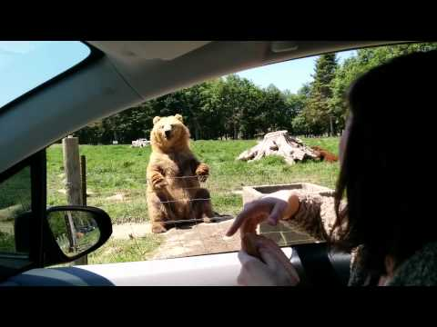 Awesome catch by the bear