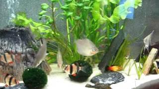 Manyak Aquarium new style