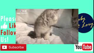 Most Cute Kitten In A Trance Funny Cat Video