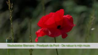 Stadsdokter Biemans - Proefpark de Punt - De natuur is mijn muze