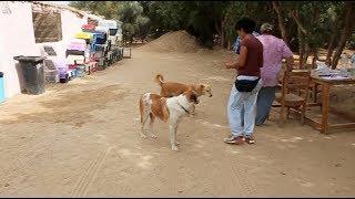أجنبية تفتح مزرعة لإخصاء الكلاب الضالة في الغردقة
