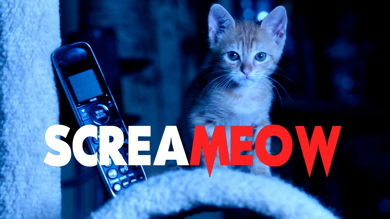 SCREAM (Cute Kitten Version) - Kitten HORROR Movie Parody