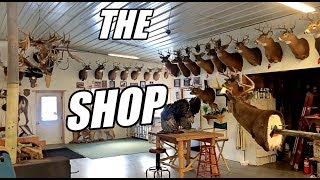Welcome to the Shop! (TAXIDERMY & A BIT OF WHAT WE DO)