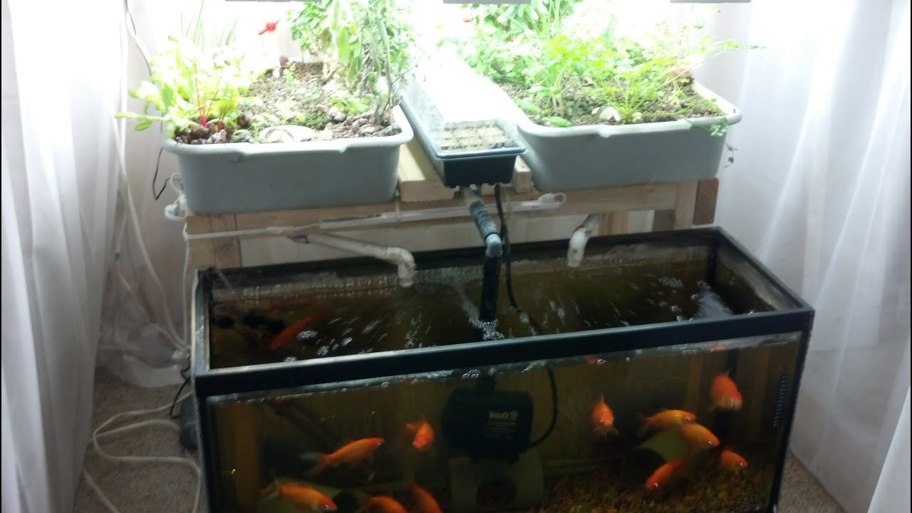 Small-Scale Aquaponics System For Hobbyists/Beginners