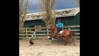 My Horse Hates Birds Compilation