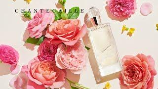 궁극의 장미 향수, 퍼퓸 드 샹테카이 다비 로즈의 비하…