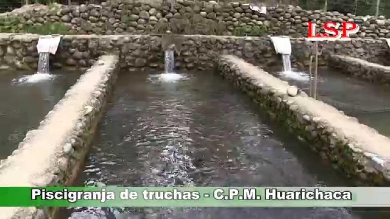 Pachitea criadero de truchas en el c p m de huarichaca for Criaderos de pescados colombia