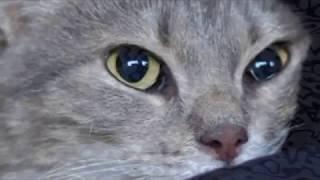 Мужчина взял кота на руки, кот обнял его лапами, уткнулся носом и замурчал
