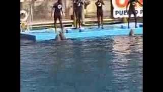 Dolphin Show @ Ocean World - Puerto Plata, January 2014